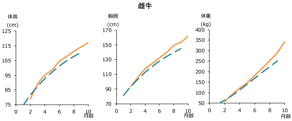 日甜和牛育成給与時の体高・胸囲・体重の変化(雌牛)